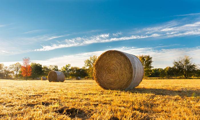 Family Farm Relief Bill Proposed by Jones, Grassley Signed into Law